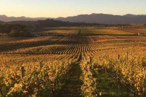 Giesen_wines