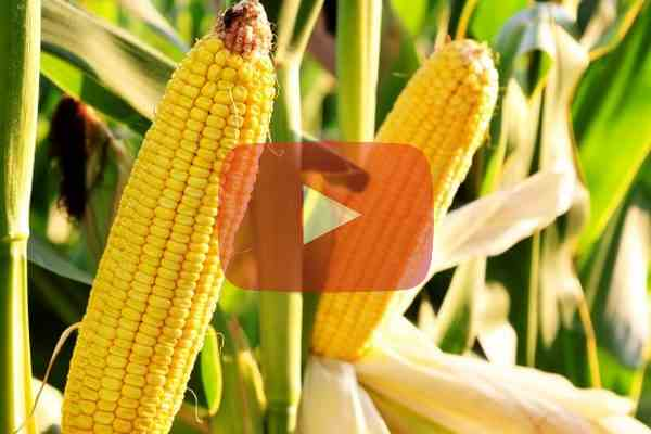 Video: How upgraded ERP sows the seeds of success