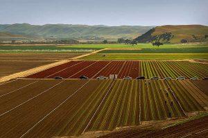 Salinas_NZAgTech_Western Growers deal