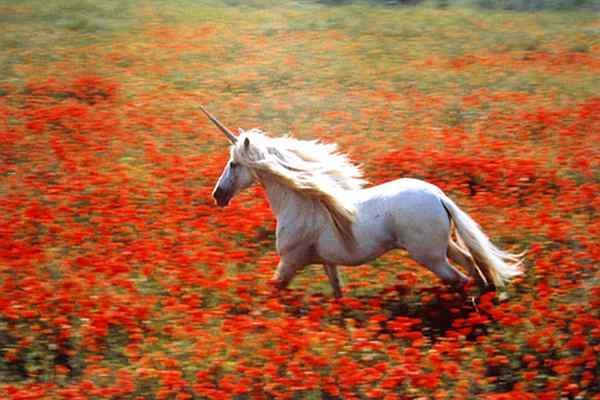NZ breeds unicorns, but poppy cutters persist