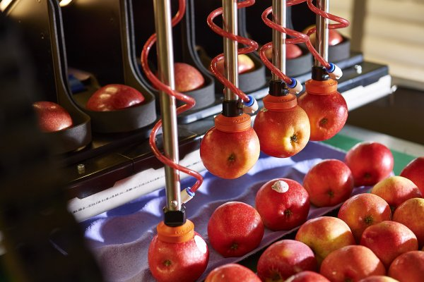 Seasonal worker shortages drive Robotics Plus apple packing tech