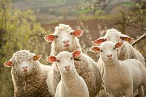 Wool exchange ransomware_Talman Software