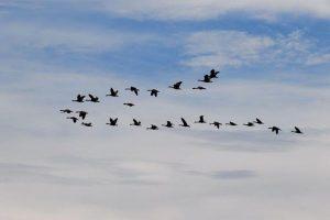 Zag_S4HANA_SAP-Migration