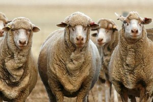 Australian wool testing authority
