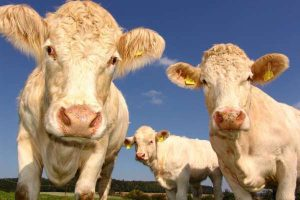 Agritech NZ funding_Farm 2050